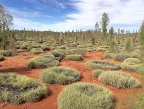 Australian Desert Landscape by Annika  Leichtweiss