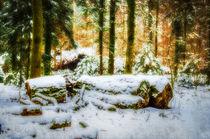 Ruhe im Winterwald von Nicc Koch