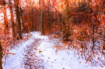 Weg im Winterwald von Nicc Koch
