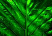 Grünes Blatt von Iris Heuer