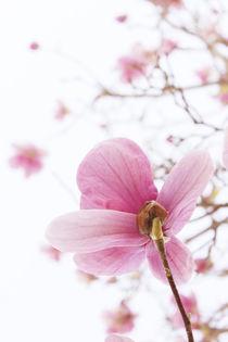 Spring III von Lili Marti