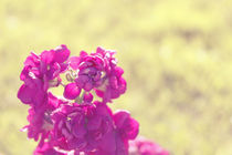 Spring II von Lili Marti