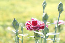 Spring by Lili Marti