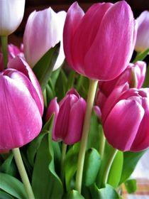 pinkfarbige Tulpen by assy