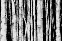 Trunks by Christina Sillèn
