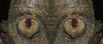 Baum Gesicht von fotolos