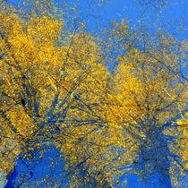Autumn explosion by Christina Sillèn