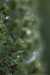 spruce bokeh by studioflara