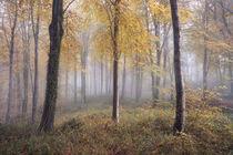 Autumnal Hooke von Chris Frost