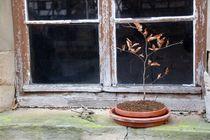 Vor dem Fenster von Angelika Keller