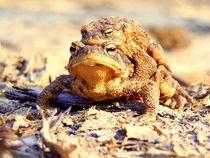 Life of toads - Das Leben der Kröten von salogwynfineart