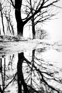 Private mirror of a tree  by salogwynfineart