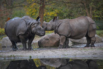 Rhinos in Love   by Ruth Klapproth