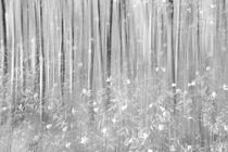 Anemone forest by Christina Sillèn