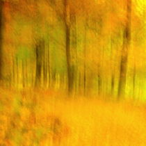 Yellow autumn by Christina Sillèn
