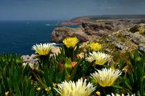 Gelbe Mittagsblumen by Iris Heuer