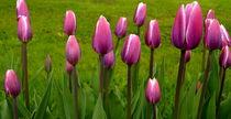 Pink Tulip von Iris Heuer