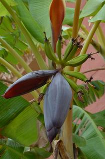 Banane von Iris Heuer