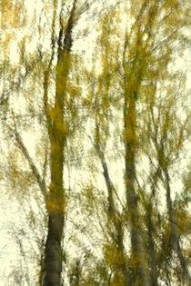 Autumn wind by Christina Sillèn