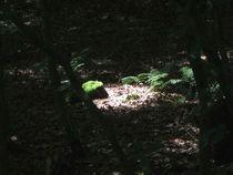 Licht und Schattiges - Im Licht von Angelika Keller