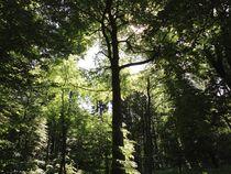 Licht und Schattiges - Im Wald von Angelika Keller