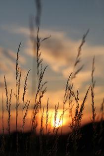 Gräser im Licht by Peggy Graßler