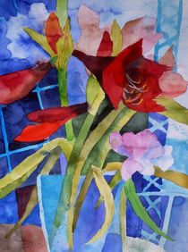 Amaryllis by Claudia Pinkau