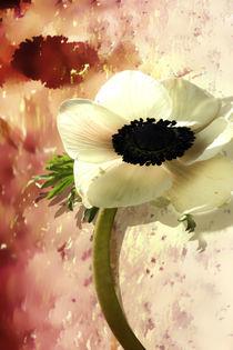Zauber einer Blume  by Ingrid Clement-Grimmer