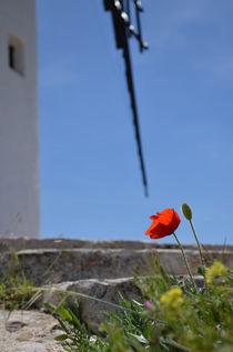 Mohnblume mit Windmühle by Iris Heuer