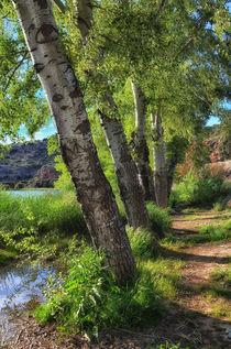 Lagunas de Ruidera von Iris Heuer