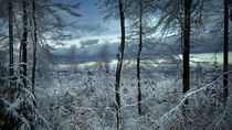 Winterwald by la-mola-lighthouse