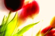 Farbtupfer von Petra Dreiling-Schewe