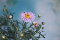 Blumengruß / 1 von Heidi Bollich