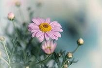 Flowers / 9 von Heidi Bollich