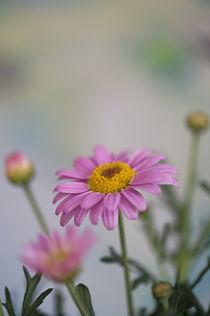 Flowers / 12 von Heidi Bollich