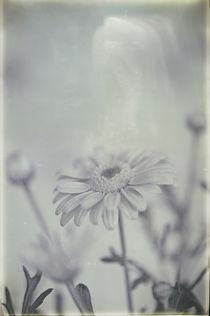 Flowers / 10 von Heidi Bollich