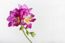 Flowers / 4 von Heidi Bollich