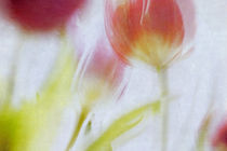 Frühlingsbote Tulpenstrauß von Petra Dreiling-Schewe