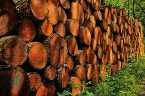 Holzstapel von Iris Heuer
