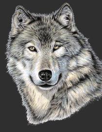 The Dark Wolf von Nicole Zeug