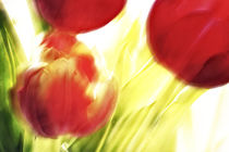 Tulpen in Bewegung by Petra Dreiling-Schewe