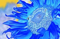 'fantasy flower...' von loewenherz-artwork