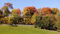 Herbstimpression by rosi-hainz
