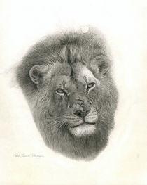 Lion portrait by Ravel Saswata Petershagen