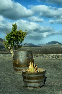 Weinfass mit Baum by Iris Heuer