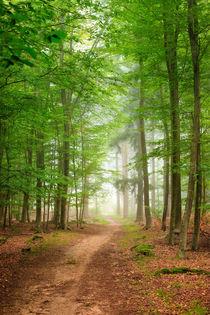 Waldweg von Bettina Dittmann