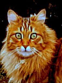 Katze von rewe