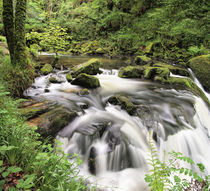 Golitha Falls by Pete Hemington