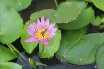 Water Lily von Tricia Rabanal