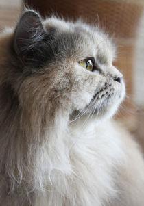 Cat von Tricia Rabanal